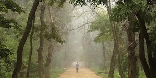 Man Walking-Path